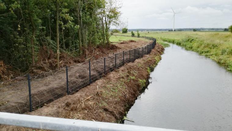 Svinepest i Kina giver krøller på halen i Danmark