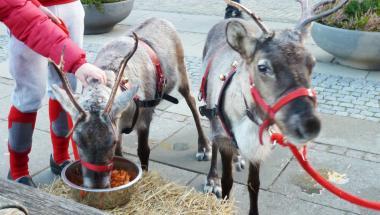 Kom og klap julemandens rensdyr