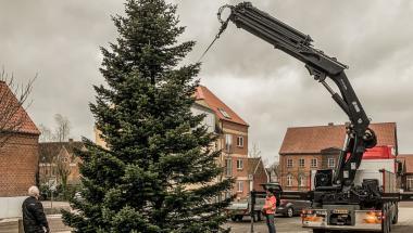 Så blev de første tre juletræer sat op i Aars