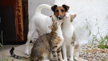 Vegger-hund i New Zealand