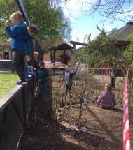 Børnene i Haubro har bygget pilehytte